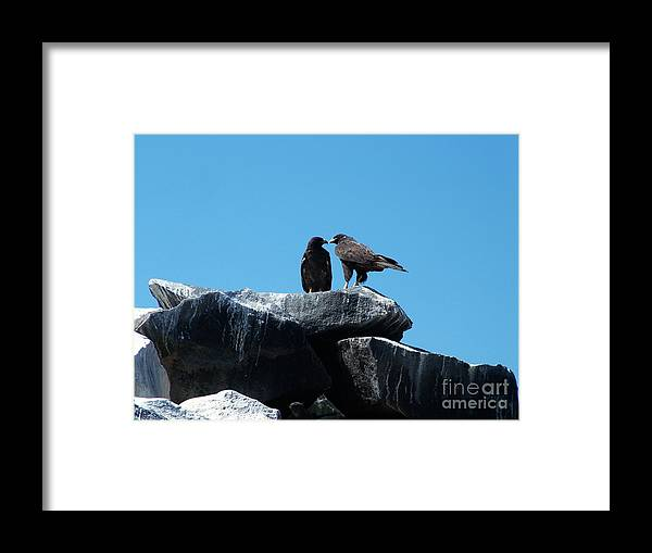 Galapagos Framed Print featuring the photograph Polyandry by Fabian Romero Davila