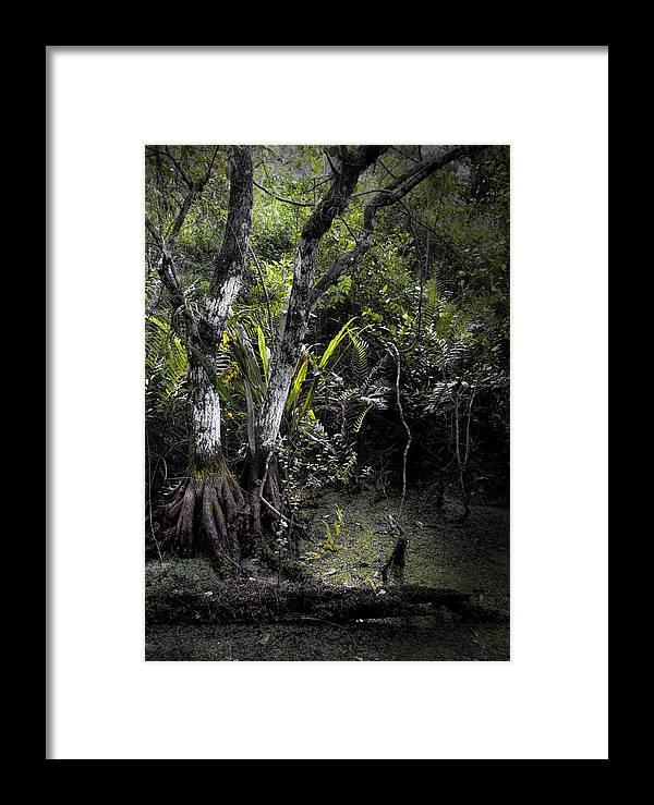 Arthur R. Marshall Framed Print featuring the photograph Pond Apple by Rudy Umans