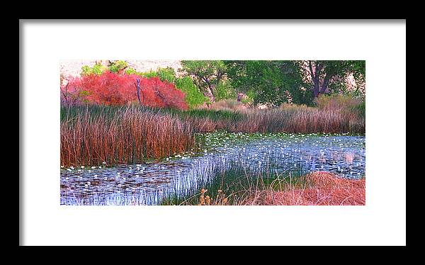 Pond Framed Print featuring the photograph Pond by Marilyn Diaz