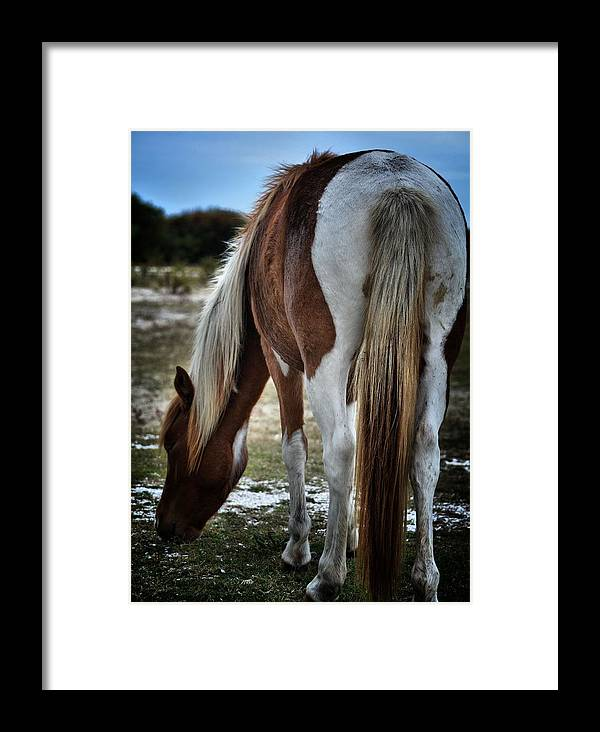 Assateague Island Framed Print featuring the photograph Pony Tail by Robert McCubbin