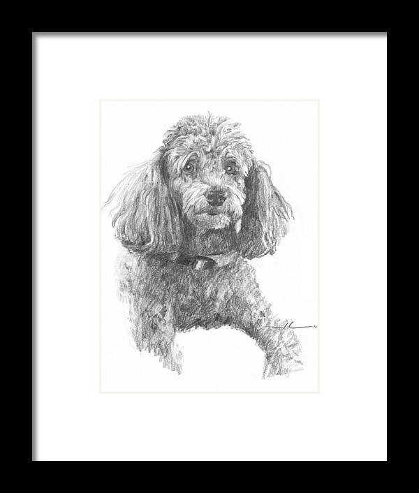 <a Href=http://miketheuer.com Target =_blank>www.miketheuer.com</a> Poodle Pencil Portrait Framed Print featuring the drawing Poodle Pencil Portrait by Mike Theuer