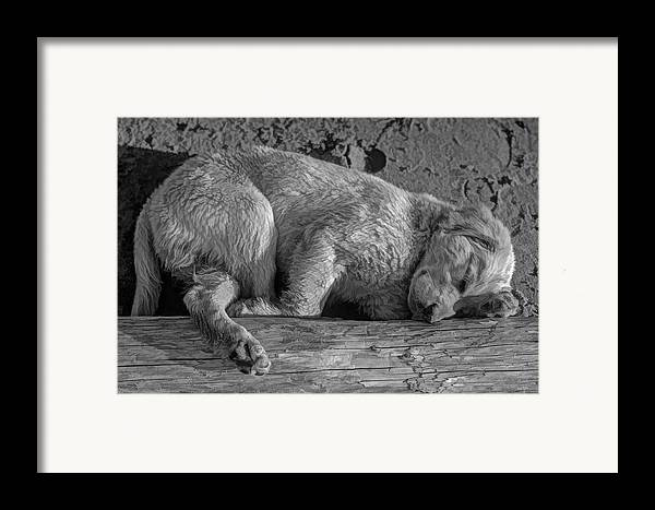Puppy Framed Print featuring the photograph Pooped Puppy Bw by Steve Harrington