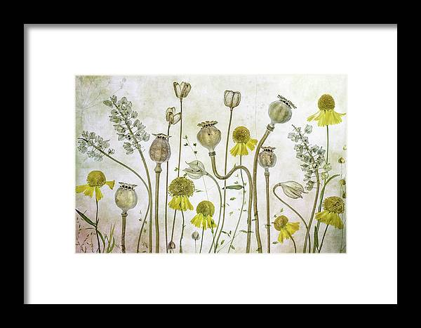Poppy Framed Print featuring the photograph Poppies And Helenium by Mandy Disher