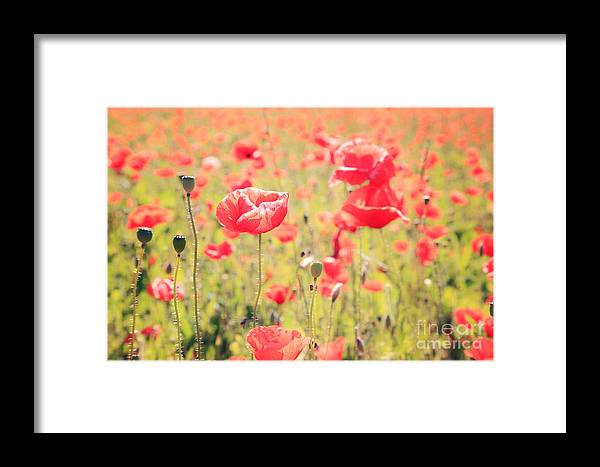 Vintage Framed Print featuring the photograph Poppies In Tuscany - Italy by Matteo Colombo