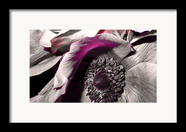 Flower Framed Print featuring the photograph Poppy Eye by Sharon Costa