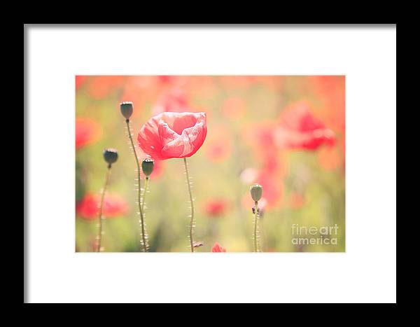 Vintage Framed Print featuring the photograph Poppy Field In Tuscany - Italy by Matteo Colombo