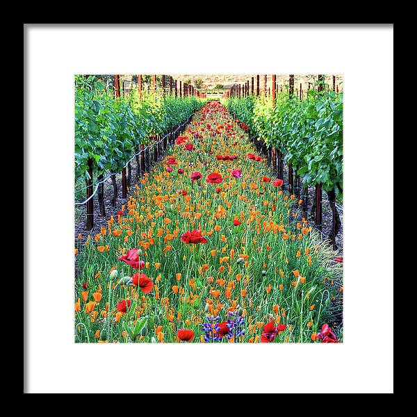 Tranquility Framed Print featuring the photograph Poppy Lined Vineyard by Rmb Images / Photography By Robert Bowman