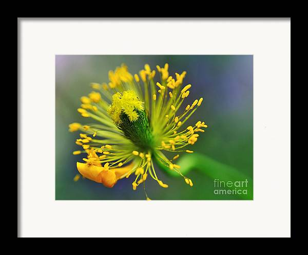 Photography Framed Print featuring the photograph Poppy Seed Capsule 2 by Kaye Menner