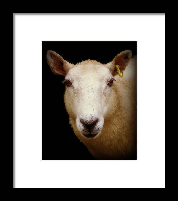 Ewe Framed Print featuring the photograph Portrait Of A Ewe by Catherine Ali