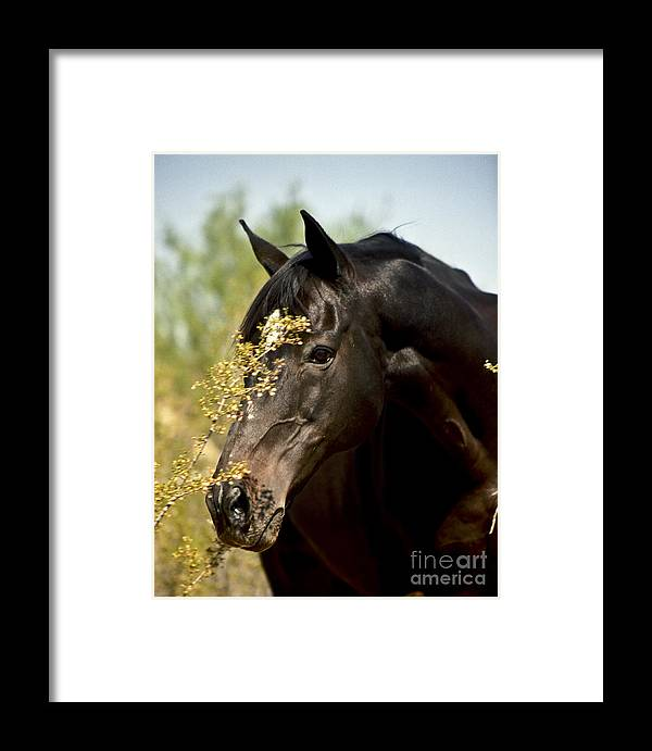 Horse Framed Print featuring the photograph Portrait Of A Thoroughbred by Kathy McClure