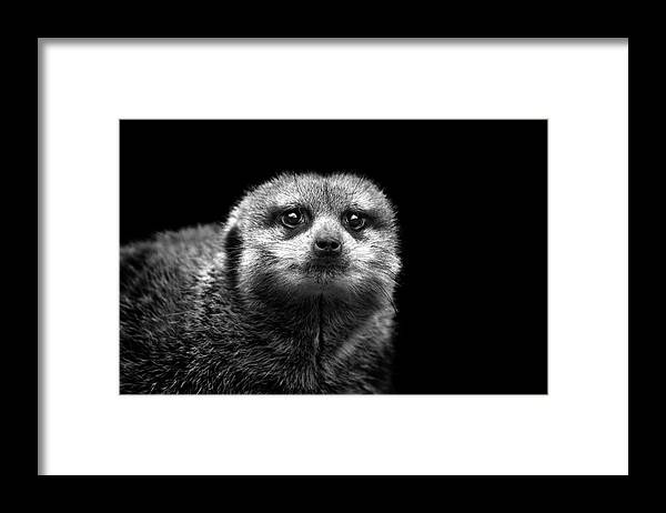 Alertness Framed Print featuring the photograph Portrait Of Meerkat by Malcolm Macgregor
