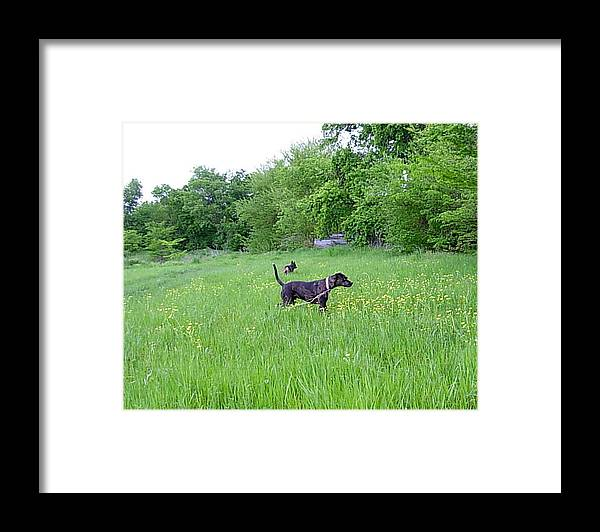Bella Framed Print featuring the photograph Posing Pretty Bella In Field by K Marie