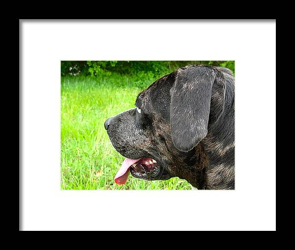 Dog Framed Print featuring the photograph Posing Pretty Bella by K Marie