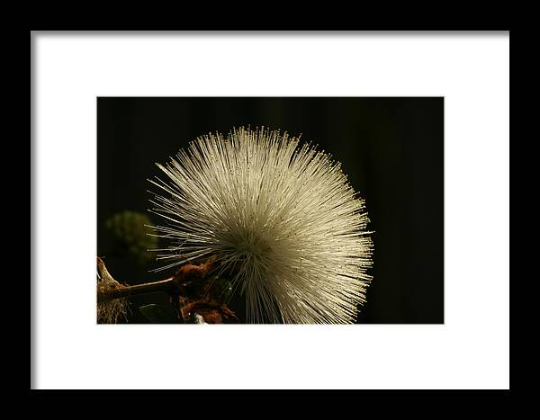 Flowers Framed Print featuring the photograph Post Petal by Glenda Dykstra