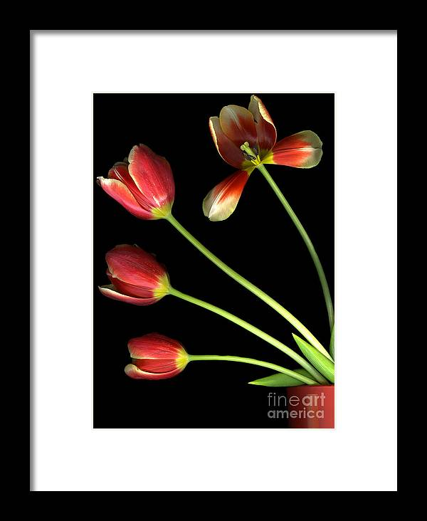 Scanography Framed Print featuring the photograph Pot Of Tulips by Christian Slanec