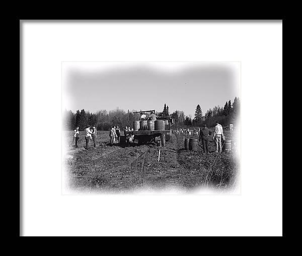 Potato Harvest Framed Print featuring the photograph Potato Harvest 3 by Gene Cyr