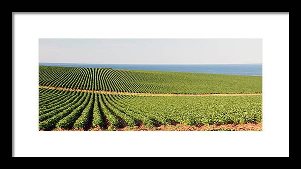Landscape Framed Print featuring the photograph Potatos By The Sea by Frank Falzett
