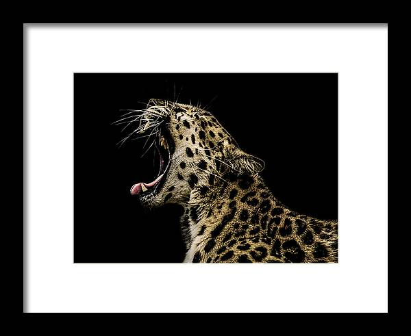Leopard Framed Print featuring the photograph Jaded by Paul Neville