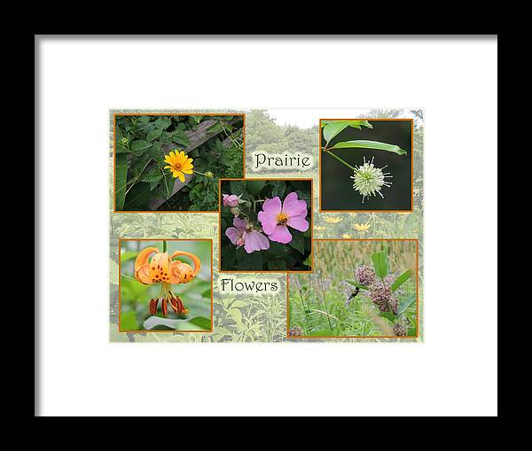 Collage Framed Print featuring the photograph Prairie Flowers by Teresa Schomig