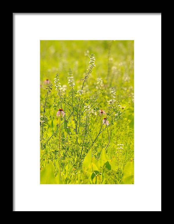 Prairie Framed Print featuring the photograph Prairie Light by Dick Todd