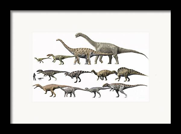 Comparison Framed Print featuring the digital art Prehistoric Era Dinosaurs Of Niger by Nobumichi Tamura