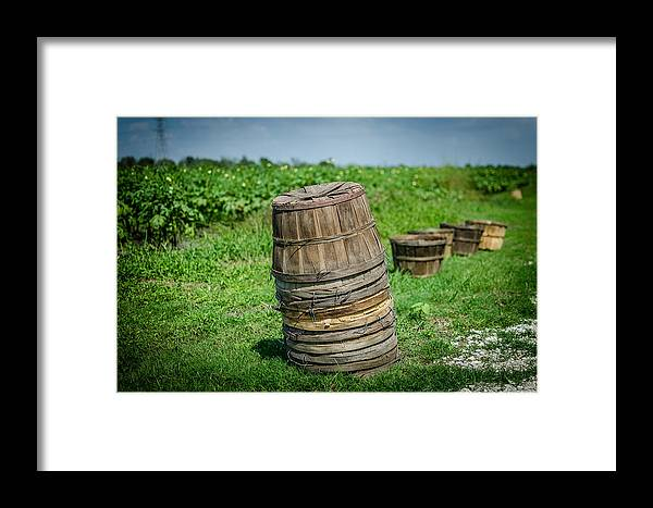 Okra Framed Print featuring the photograph Preparing For The Harvest by David Morefield