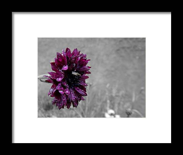 Pretty In Purple Framed Print featuring the photograph Pretty In Purple by Brenda Conrad