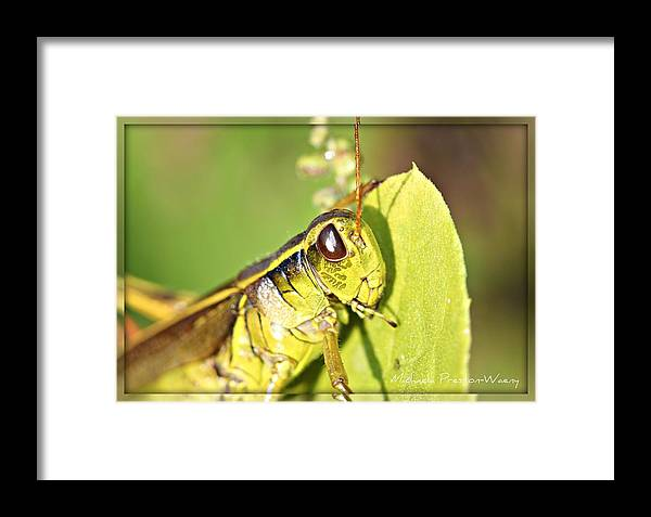 Nature Framed Print featuring the photograph Pretty by Michaela Preston