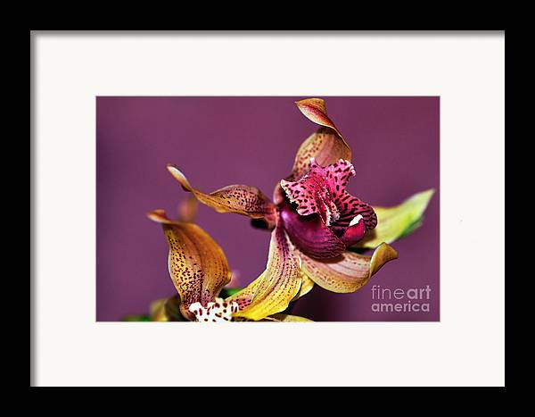 Photography Framed Print featuring the photograph Pretty Orchid On Pink by Kaye Menner
