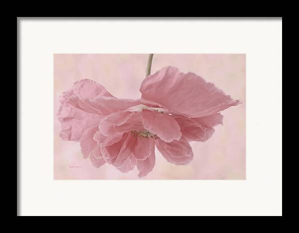 Poppy Framed Print featuring the photograph Pretty Pink Poppy Macro by Sandra Foster