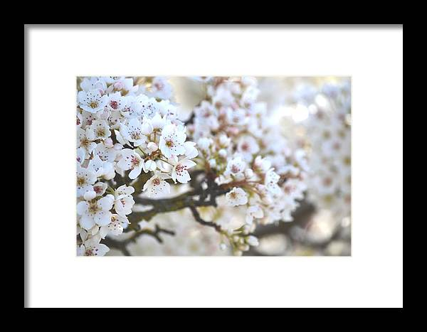 Spring Framed Print featuring the photograph Pretty White Flowering Tree In Spring by P S
