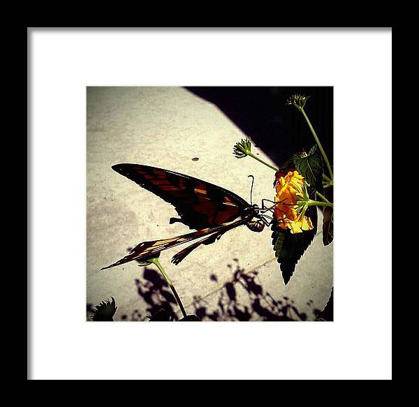 Butterfly Framed Print featuring the photograph Prey The Yellow Flower by Aaron Simmons