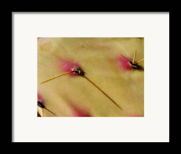 Prickly Framed Print featuring the pyrography Prickle by Kortney Jaworski