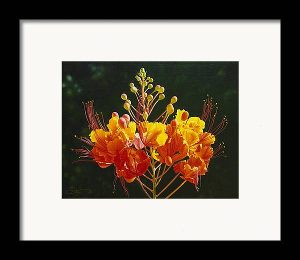 Floral Framed Print featuring the painting Pride Of Barbados by Gary Hernandez