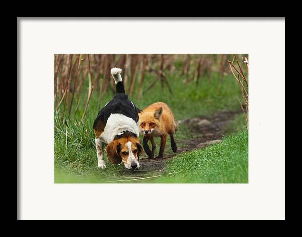 Animals Framed Print featuring the photograph Probably The World's Worst Hunting Dog by Mircea Costina Photography