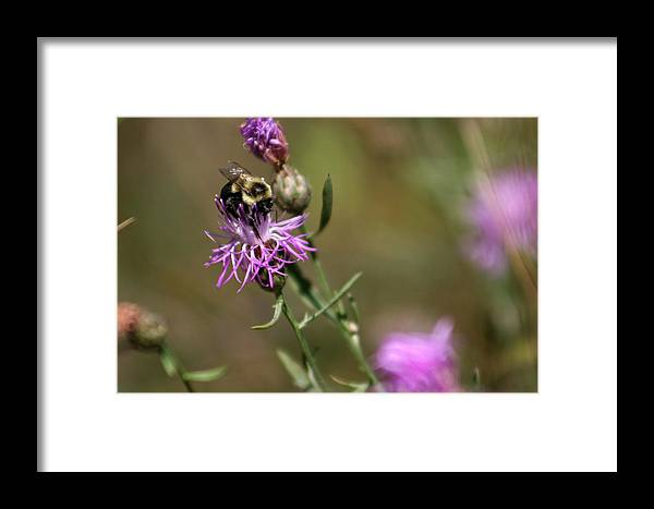 Bee Framed Print featuring the photograph Productive Bee by Allan Lovell