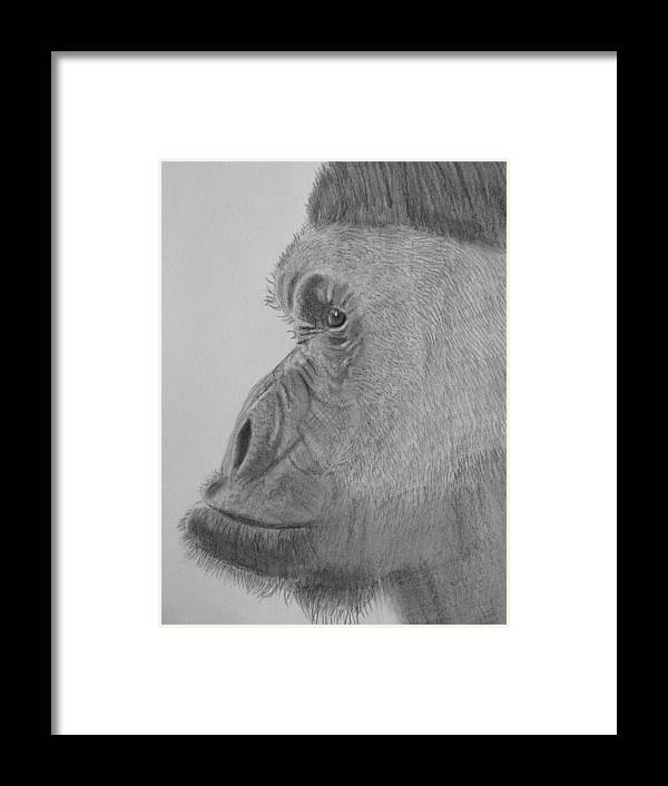 Profile Of Mr G. Framed Print featuring the drawing profile of mr G. by Paul Blackmore