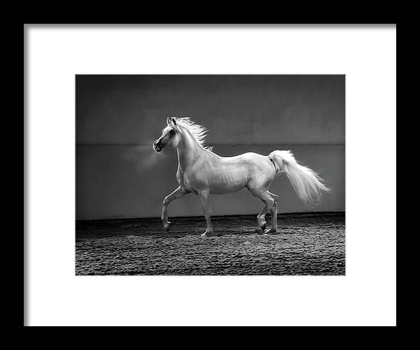 Horse Framed Print featuring the photograph Proud Arabian Horse - Stallion In by Kerrick