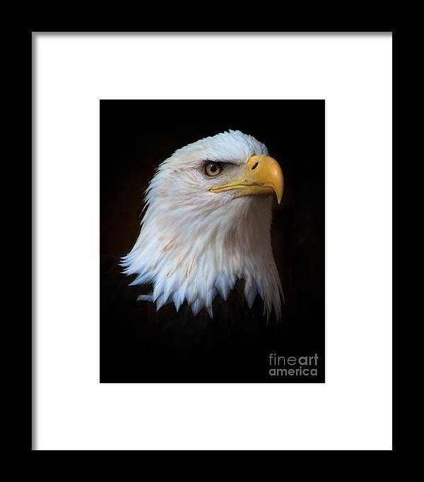 Eagle Framed Print featuring the photograph Proud by Julie Halloran