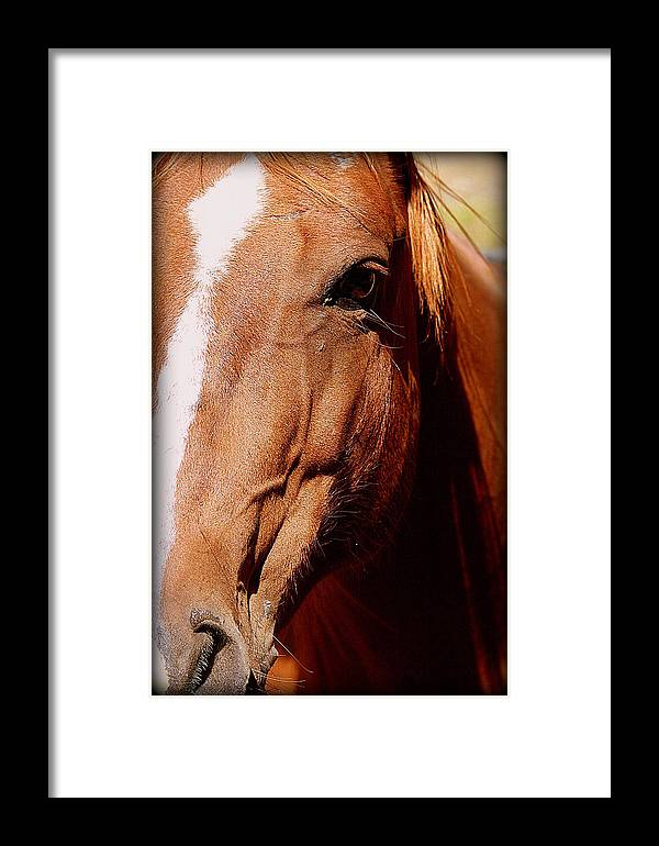 Horse Framed Print featuring the photograph Proud by Kerri Huven