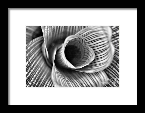 Nature Framed Print featuring the photograph Proud Stripes by Tami Martin