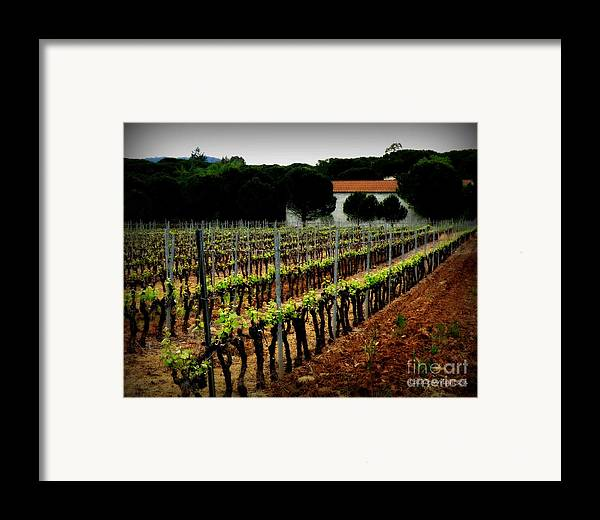 Vineyard Framed Print featuring the photograph Provence Vineyard by Lainie Wrightson