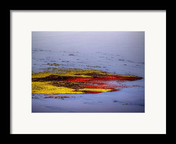 Algae Framed Print featuring the photograph Psychedelic Algae by Thomas Young