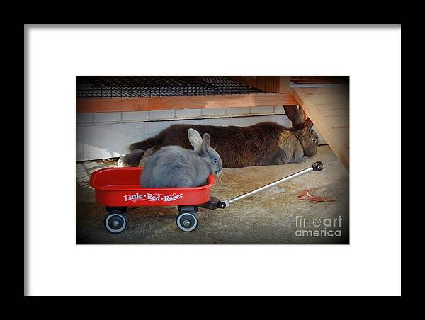 Rabbit Framed Print featuring the photograph Pull Me Mom by Renee Trenholm