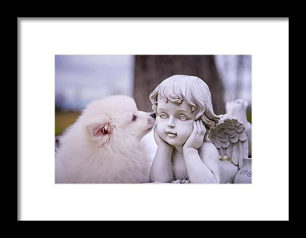 Dog And Angel Framed Print featuring the photograph Puppy And Angel by Bonnie Barry