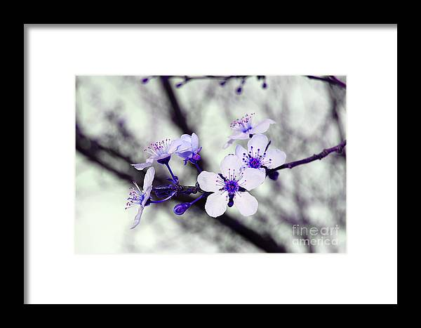 Blossom Framed Print featuring the photograph Purple Blossoms by Debra Thompson