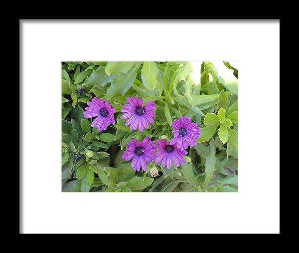 Purple Flowers Framed Print featuring the photograph Purple By The Sea by Cyndi Cates