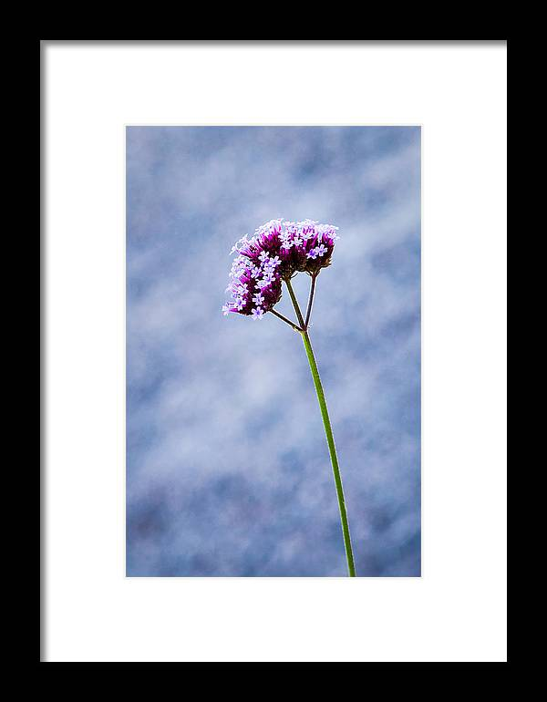 Art Framed Print featuring the photograph Purple Flower by Alexander Senin