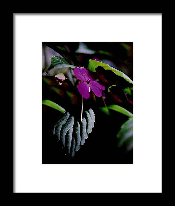 Flower Framed Print featuring the photograph Purple Flower Odd Leaves by Alfredo Martinez