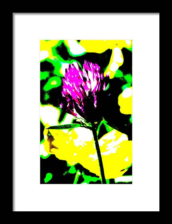 Fabaceae Framed Print featuring the photograph Purple Flower by Patrick Kessler